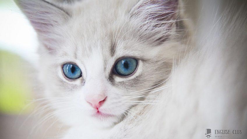 Самые красивые имена для кошек на английском