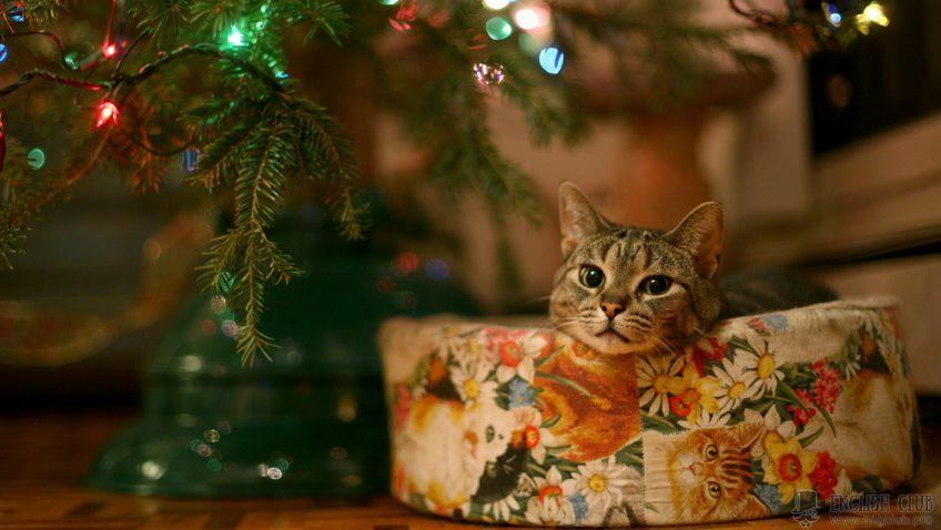 Рождественские поздравления на английском языке