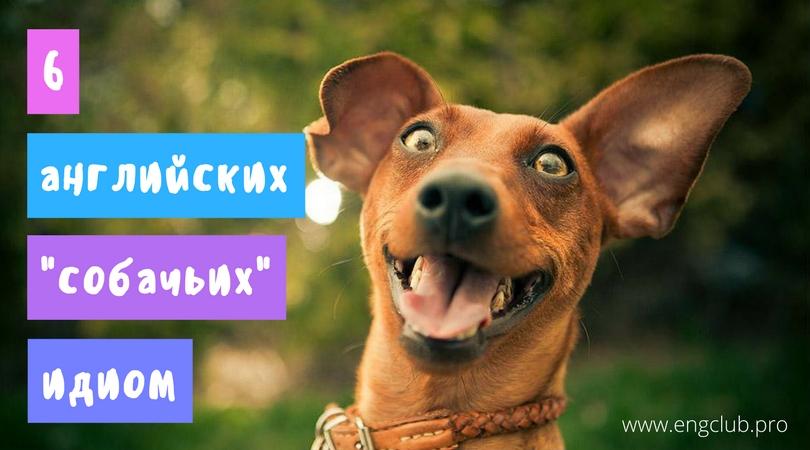 6 английских «собачьих» идиом